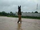 星宝宠物训练基地