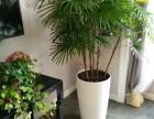 苏州虎丘植物租赁,苏州小园丁园艺,专业绿植租摆方案免费设计