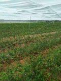 赣州防虫网应用广泛 志广丝网为您服务绿色健康防虫网无公害