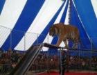 泸州马戏团表演泸州本地哪里有马戏团动物表演一手资源