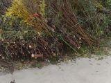 北京市清运各种垃圾装修垃圾绿化垃圾中国股市 垃圾生活垃圾