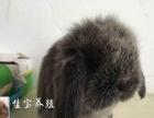 各种宠物兔批发零售送礼品