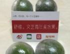 微电商培训 舒雍会 成都第一生鲜水果电商社群