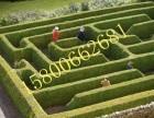 优异绿植制作 绿植迷宫出租 绿植创意迷宫租赁 迷宫设备租赁