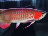 杭州卖热带鱼鱼缸的地方