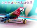 山东众鑫动物表演租赁公司 鹦鹉表演租赁