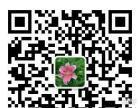 到哪里采摘百合花 到漳河新区崔院村百合花种植基地