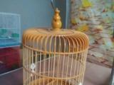 小号观赏鸟塑钢绣眼笼包邮
