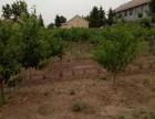 莱西望城六亩大院出售(种有桃树)