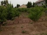 莱西望城六亩大院出售 种有桃树