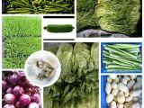 花都区雅瑶市场蔬菜配送/首选绿香园