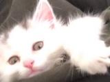 2个月大猫免费送养