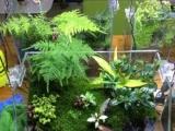 植物生态盆景南国水景