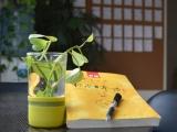 河南北学日语提醒大一新生,学习一门日语,增加竞争力
