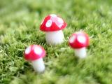 苔藓微景观饰品 卡通迷你装饰小蘑菇 DIY组装小摆件玩具10MM