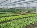 绿康达专业提供增城食材配送、黄埔食材配送食品饮料生产与批发
