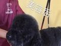 萌宠宠物美容师培训