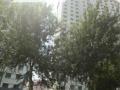 怡翠花园楼层好采光好1800/月