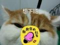 宠物狗猫专业上门洗澡,驱虫,疫苗技能服务