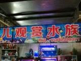 观赏鱼 10元