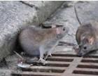 邛崃灭鼠公司+邛崃专业灭鼠公司+绿卫灭鼠公司