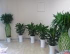 成都温江区鲜花绿植租赁,销售,植物墙,私家花园