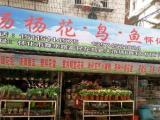 杨杨花鸟鱼怀化店