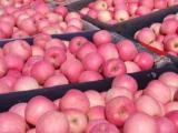 山东苹果,山东临沂早熟苹果大量上市