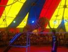 皇家马戏团表演大型动物表演