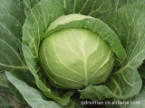 供应绿色新鲜蔬菜,叶菜类甘蓝,新鲜蔬菜甘蓝菜