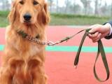 马鞍山雨山较好的宠物训练学校