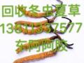 138 1133 7577锦州回收冬虫夏草东阿阿胶海参燕窝