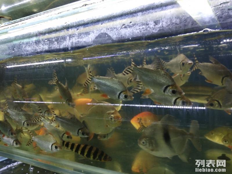 鱼缸水族箱观赏鱼