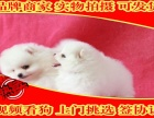 繁殖基地直销博美犬宝宝 保纯种健康 欢迎实地挑