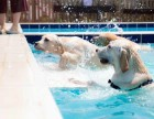 趣玩宠物乐园狗狗寄养训练训犬游泳池