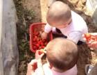 宝鸡石羊庙农家草莓园