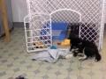 转让狗狗围栏∵附带其它狗狗用品