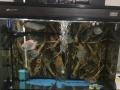 日生牌龙鱼缸带柜子,好潜水泵滴流盒过滤加热棒一套
