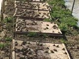 綠色環保好項目人人都贊枝江匯澤青蛙養殖投資有保障