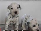 斑点狗 欢迎实地选购 完美售后 可签协议