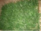 北京仿真草坪生产厂家