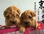 郑州有卖秋沙皮犬的吗