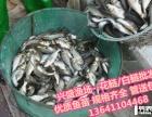 通州區觀賞魚大量供應/淡水魚苗大量供應