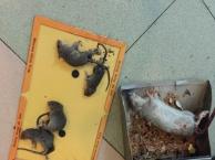 南沙灭虫、灭蟑螂、灭蚊、灭老鼠、白蚁(有资质公司)