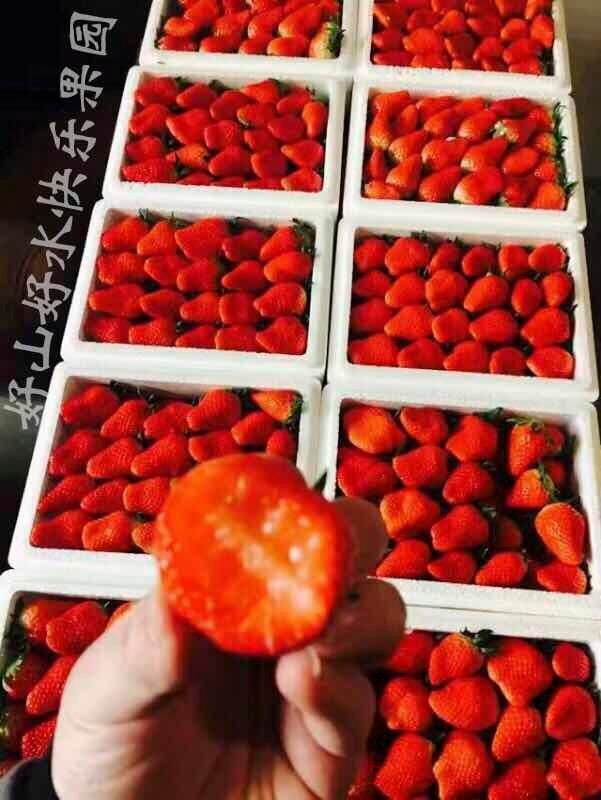 烟台生态草莓采摘,龙口+福山草莓采摘一日游,自驾游