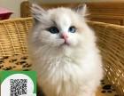 南阳哪里有宠物猫出售,南阳哪里有卖纯种布偶猫价格