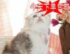 猫舍火爆直销超萌超活泼可爱折耳猫咪包健康当天包邮