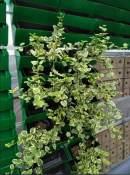 四川立体绿化植物-长沙优质的立体绿化植物哪里有供应