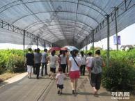 上海农家乐旅游推荐 夏季采葡萄摘西瓜 品水蜜桃之旅