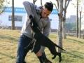 深圳三安宠物服务专业训练宠物宠物寄养优质省心